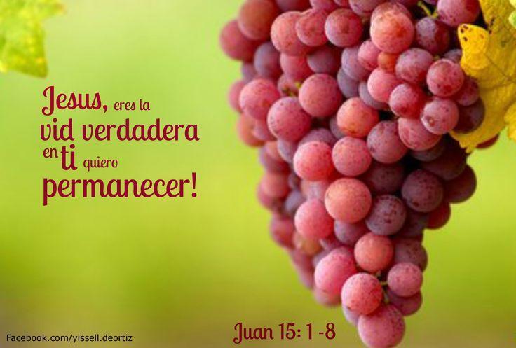 Juan 15, 1-8: El Que Permanece En Mí, Y Yo En Él, Da Mucho Fruto